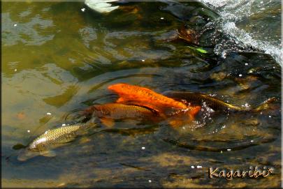 fish9c.jpg