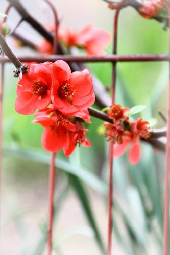 flower1000.jpg