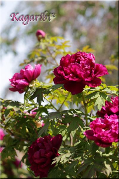 flower100b.jpg
