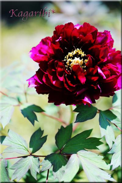 flower100d.jpg