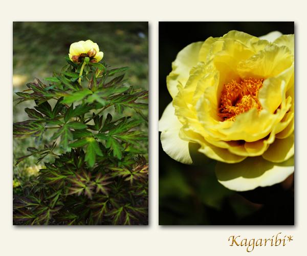 flower100e.jpg