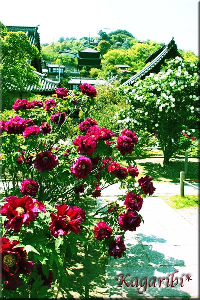 flower100f.jpg