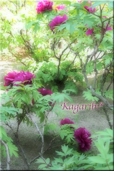 flower100g.jpg