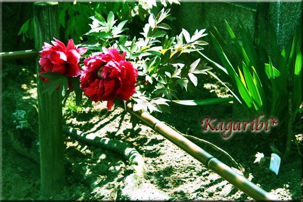 flower100h.jpg