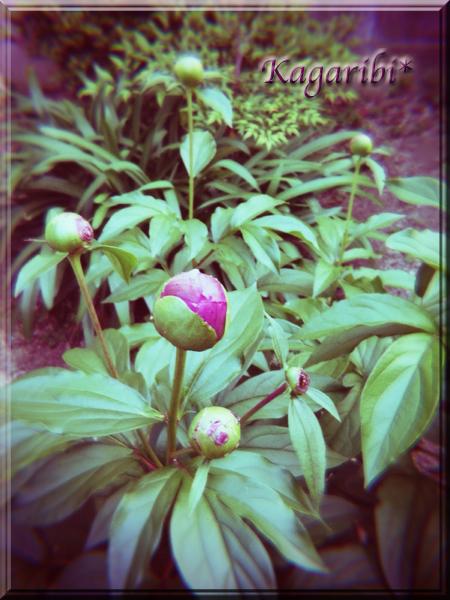 flower101a.jpg