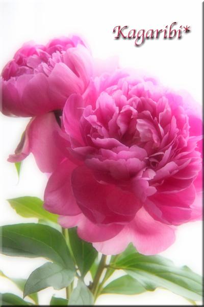 flower101b.jpg