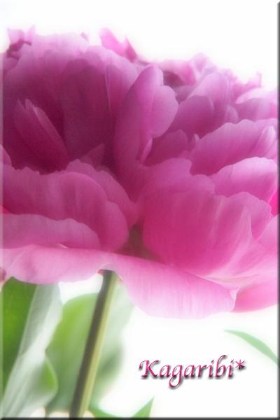 flower101c.jpg