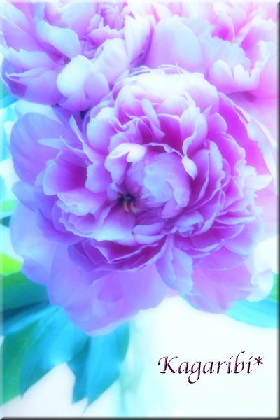 flower101e.jpg