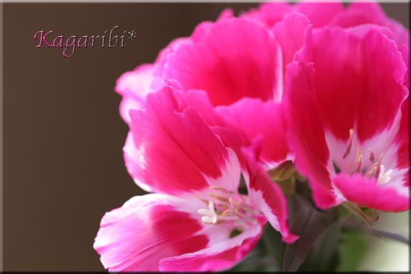 flower102a.jpg