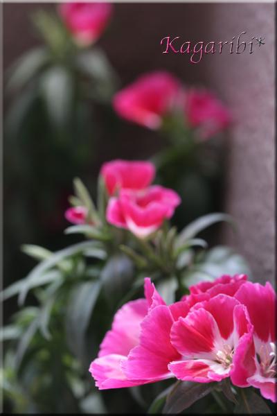 flower102b.jpg