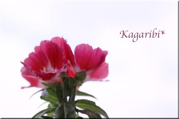 flower102c.jpg