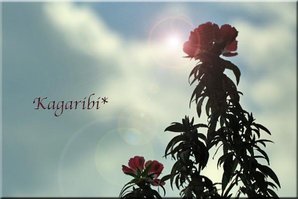 flower102d.jpg