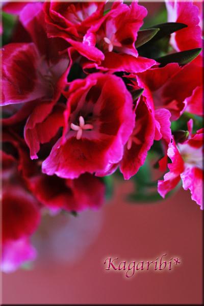 flower102e.jpg