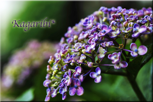 flower104a.jpg