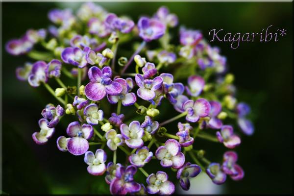 flower104b.jpg
