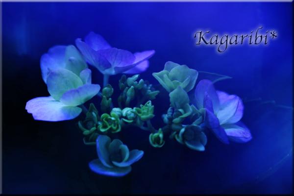 flower104c.jpg