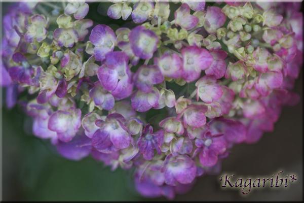 flower104d.jpg