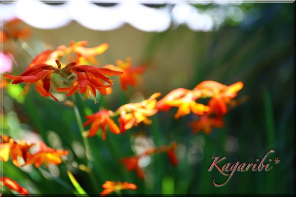 flower105a.jpg