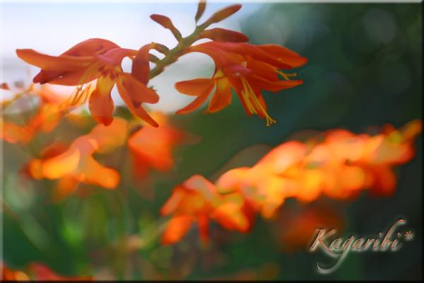 flower105b.jpg
