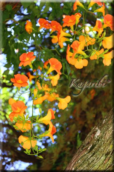 flower105c.jpg