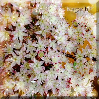 flower107a.jpg