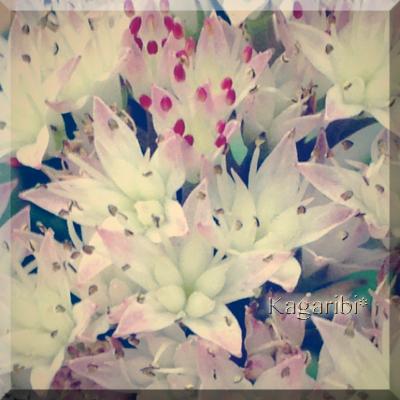 flower107b.jpg