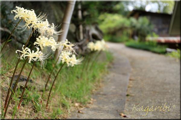 flower108a.jpg