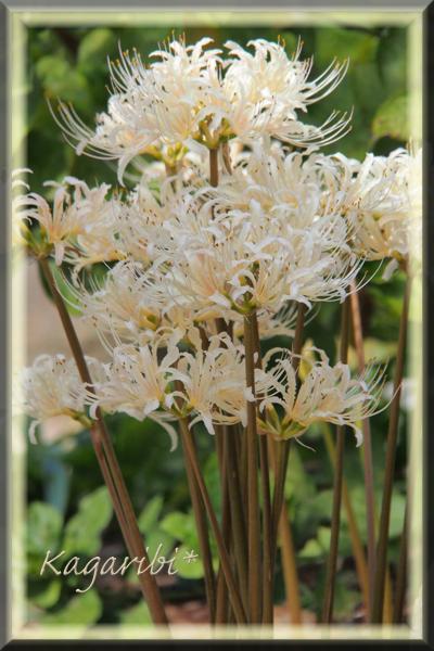 flower108b.jpg