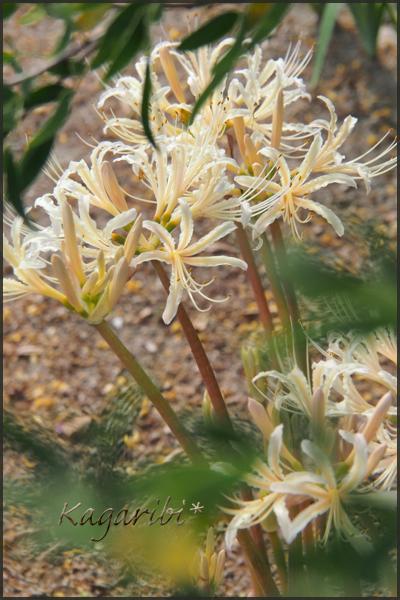 flower108c.jpg