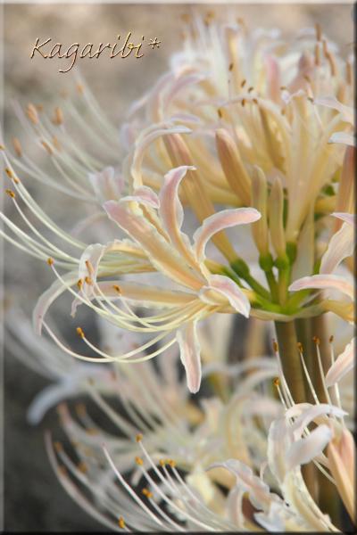 flower108d.jpg