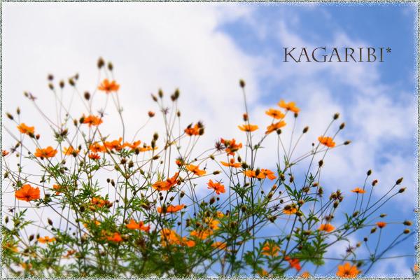 flower109.jpg