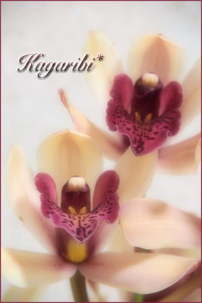 flower110.jpg