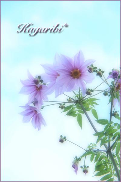 flower111a.jpg