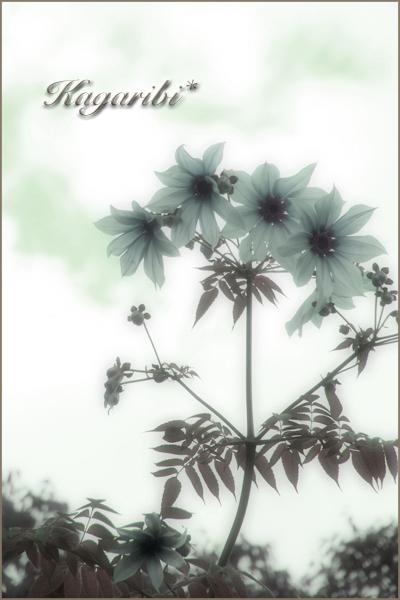 flower111b.jpg