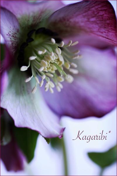 flower112b.jpg