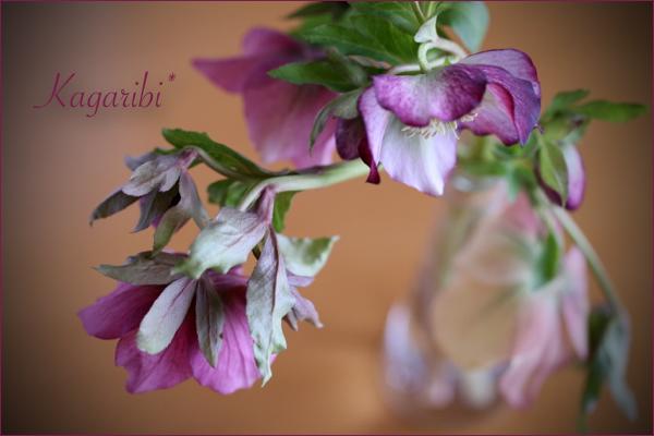 flower112c.jpg