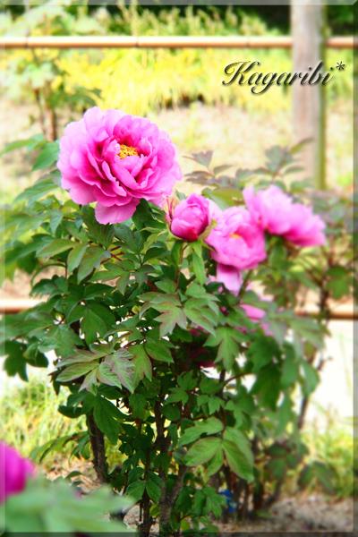 flower114a.jpg