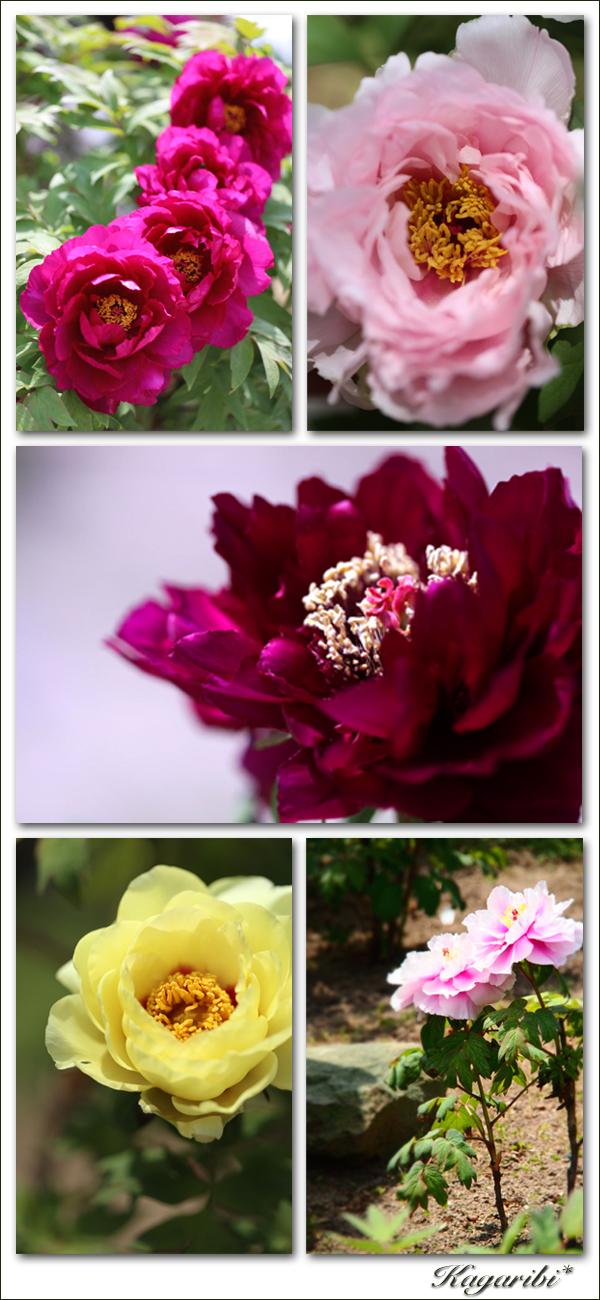 flower114b.jpg
