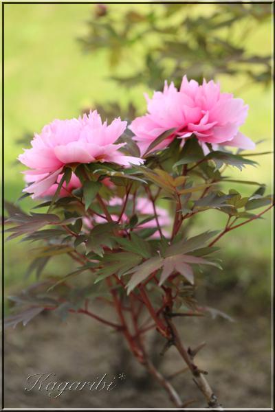flower114c.jpg