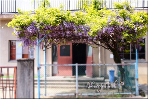 flower115a.jpg