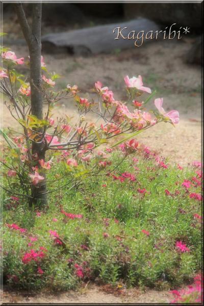 flower115b.jpg