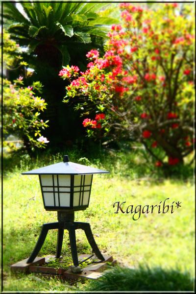 flower115c.jpg