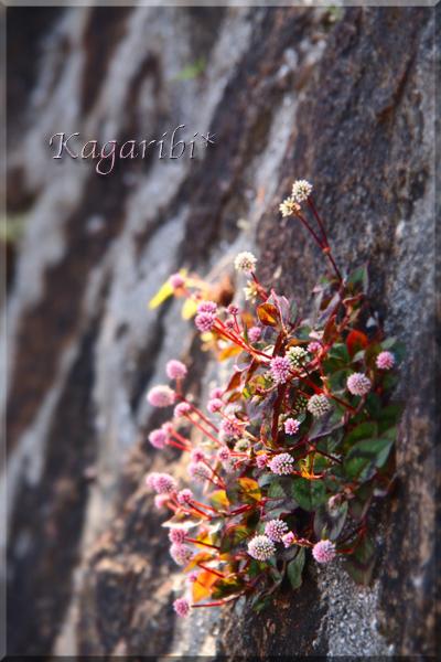 flower115d.jpg