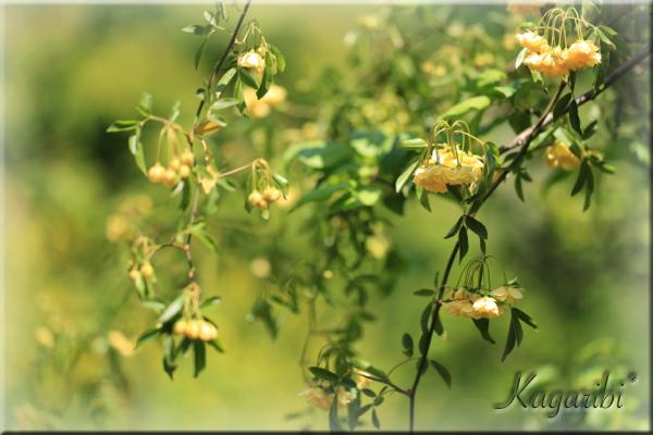 flower116a.jpg