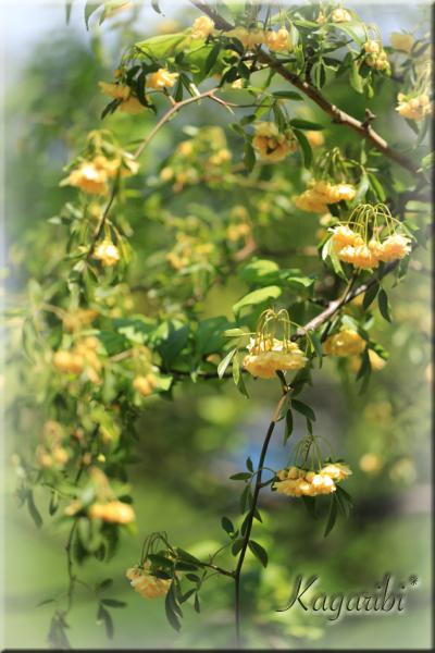 flower116b.jpg