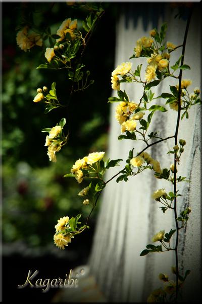 flower116c.jpg