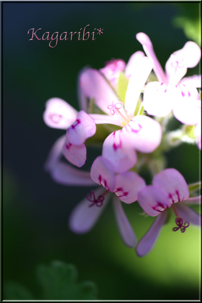flower117b.jpg