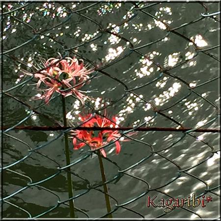 flower118bi.jpg