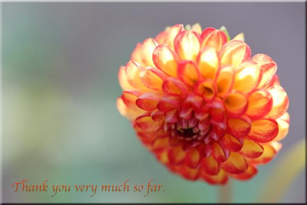 flower119a.jpg
