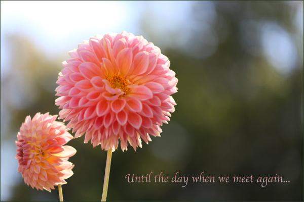 flower119b.jpg